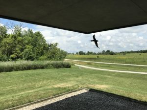 The bird wants to be in the photo! This view points in the direction of the Pine Street entrance from the Lederman Science Center. nature, wildlife, animal, bird, landscape, building, Photo: Casey Durandet