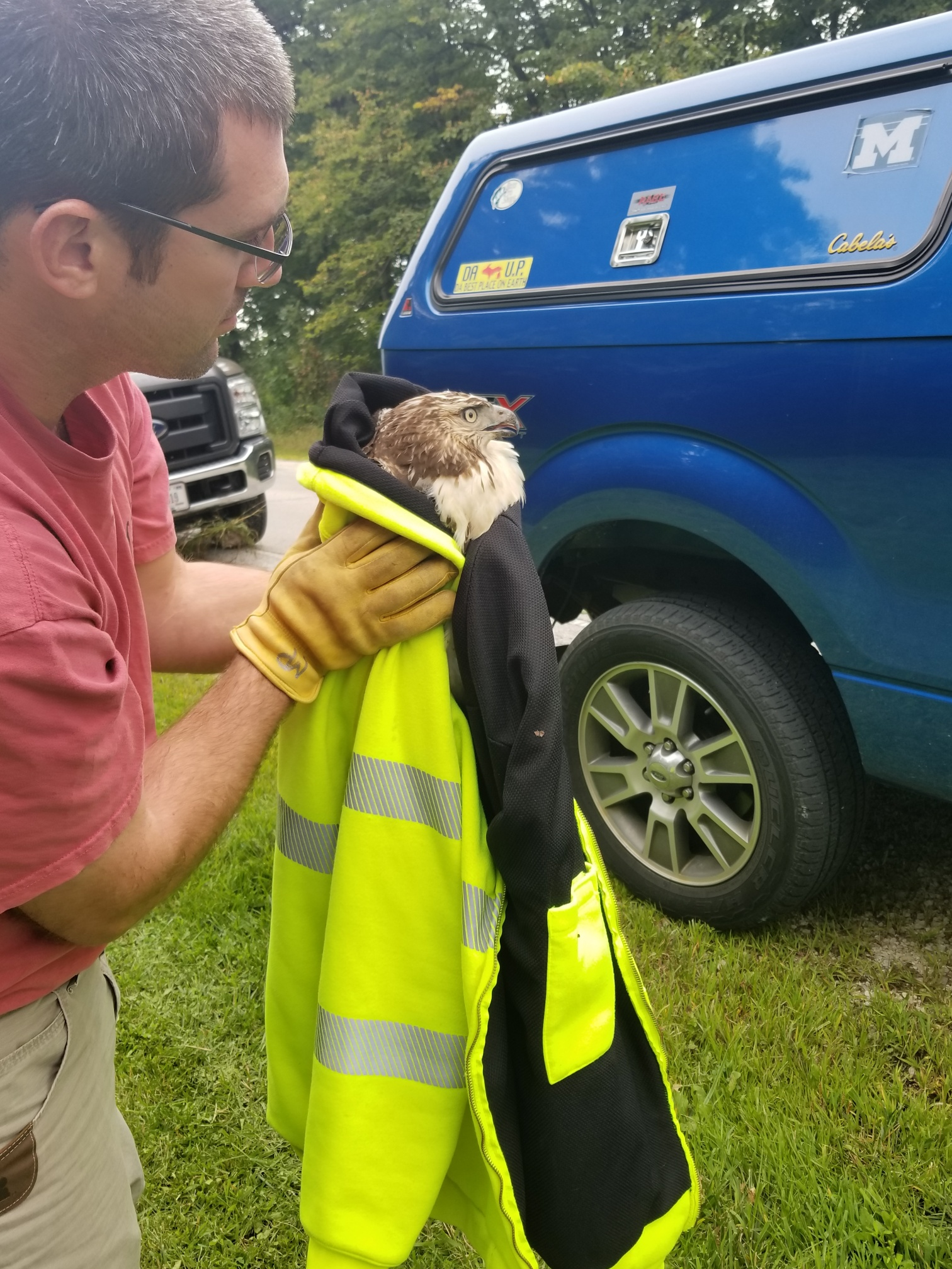 (3/3) The Roads and Grounds crew then took the hawk to Willowbrook Wildlife Center. nature, animal, bird, hawk, red-tailed hawk, people, wildlife Photo: Jon Ylinen