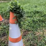 Exactly how long has this safety cone been here? How amusing! nature, plant, everyday object Photo: Wayne Shaddix