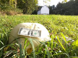 (2/2) A dollar bill is shown for scale. The big mushroom is well above recently cut grass. nature, plant, fungus, mushroom, giant puffball Photo: Aleksandr Romanov
