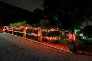 (2/2) brightly colored lights make a fun and colorful scene. lab life, holiday Photo: Elliott McCrory