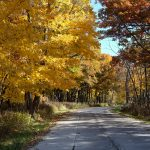 (1/2) Fall shows its splendor on outbound Pine Street. nature, landscape, fall, autumn, tree, plant Photo: Daniel Munger