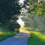 We are on a path to spring. nature, landscape, plant, tree, grass Photo: Amy Scroggins