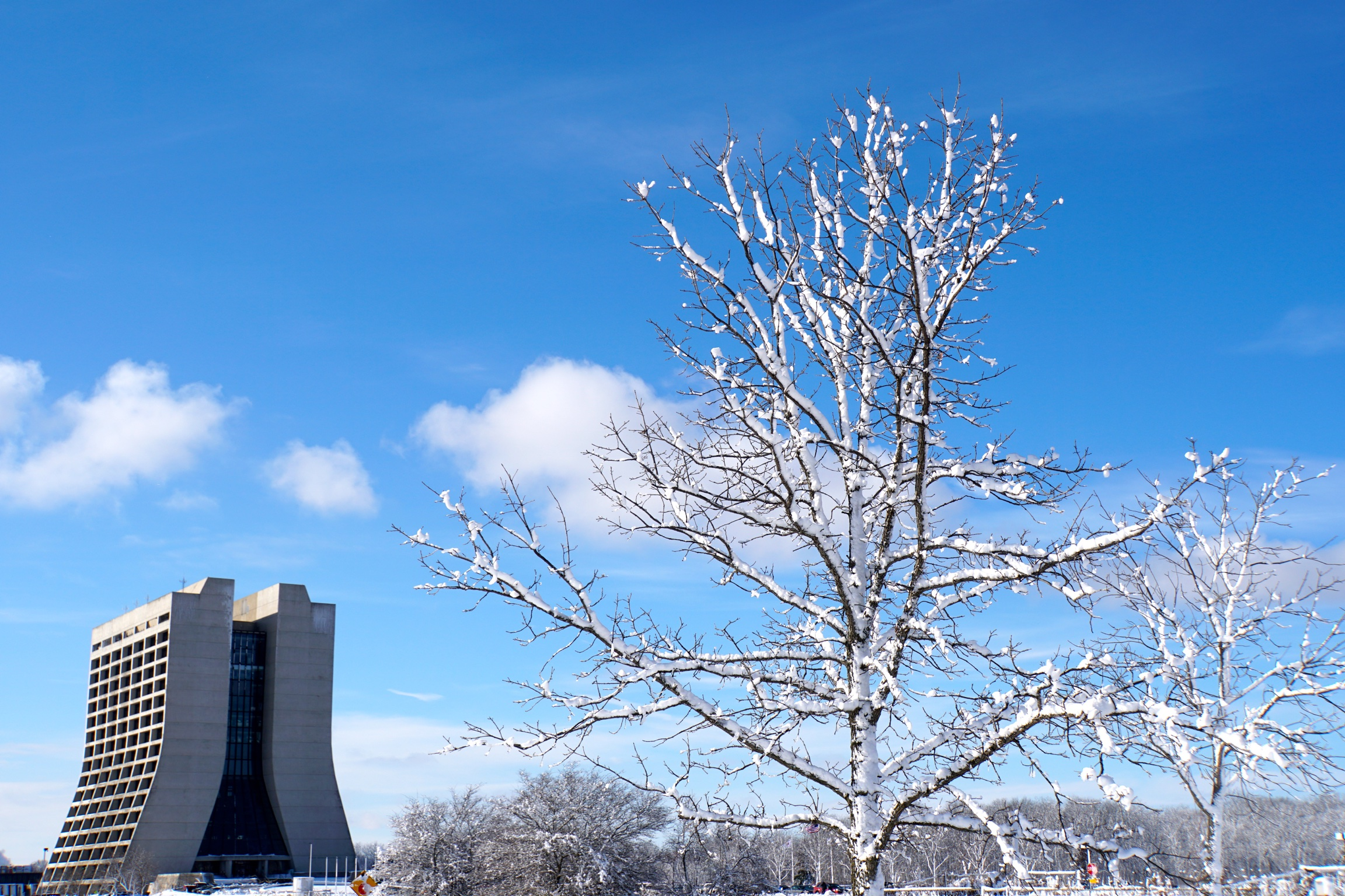 (2/3) The natural and built environment: a snowy tree in the foreground, Wilson Hall in the background. landscape, building, tree, nature, Wilson Hall, snow, sky, winter Photo: Marguerite Tonjes