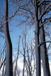 (3/3) Trees stretch up to the sky. Photo: Marguerite Tonjes
