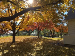 (2/3) This picture of fall in the Village was taken on Oct. 26. autumn, fall, nature, landscape, tree, plant Photo: Anne Mary Teichert