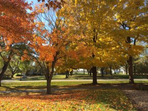 (3/3) Fall is beautiful and fleeting. Gather ye leaves while ye may. nature, landscape, tree, fall, autumn, plant Photo: Anne Mary Teichert