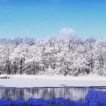 Flashback Friday: This serene scene followed the November 2018 blizzard. nature, landscape, winter, snow, tree, woods, sky, pond, water Photo: Bridget Iverson