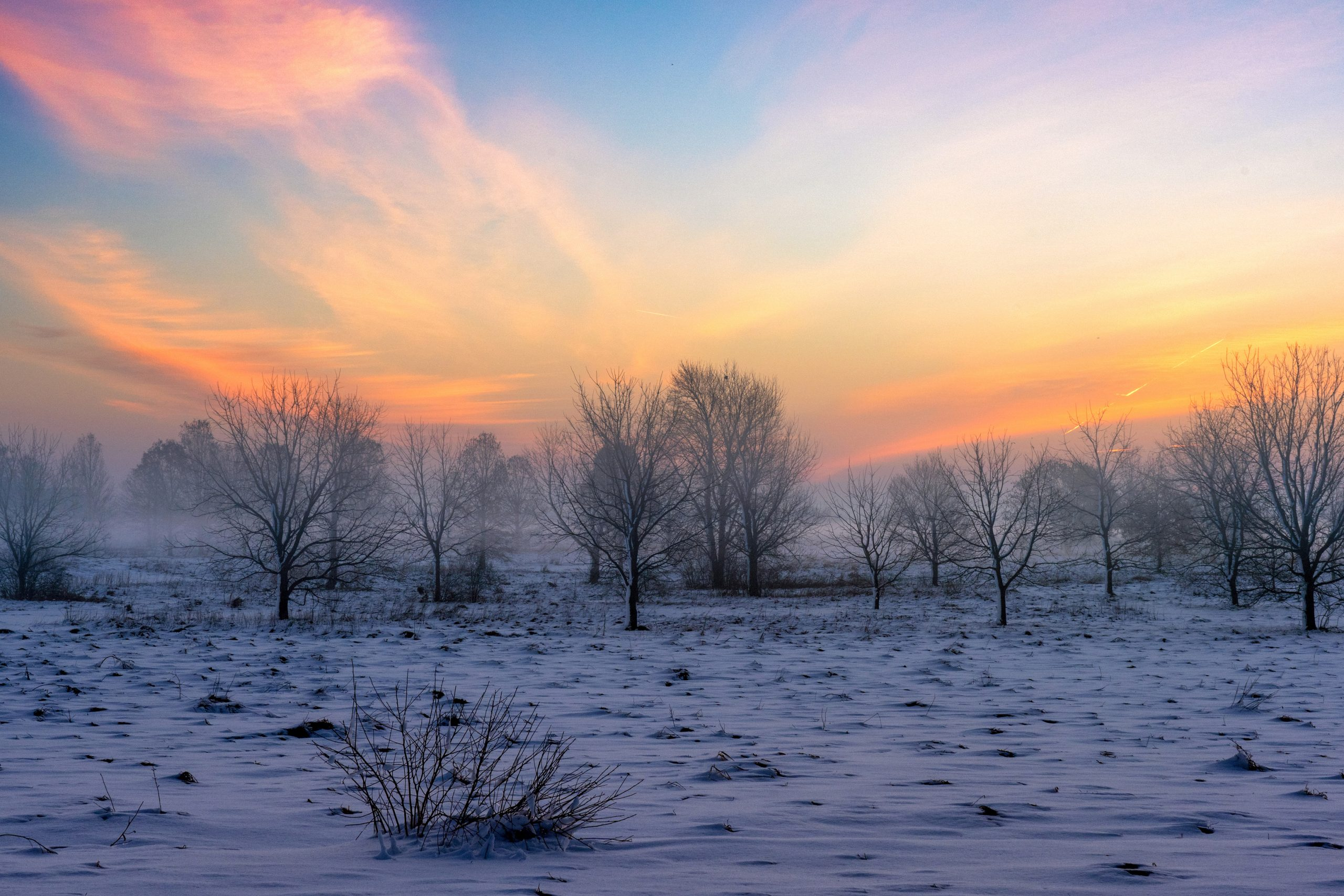 On this January day, warmth seems to float overhead while the cold stays its ground. nature, landscape, sky, winter, snow, tree, plant Photo: Timothy Chapman