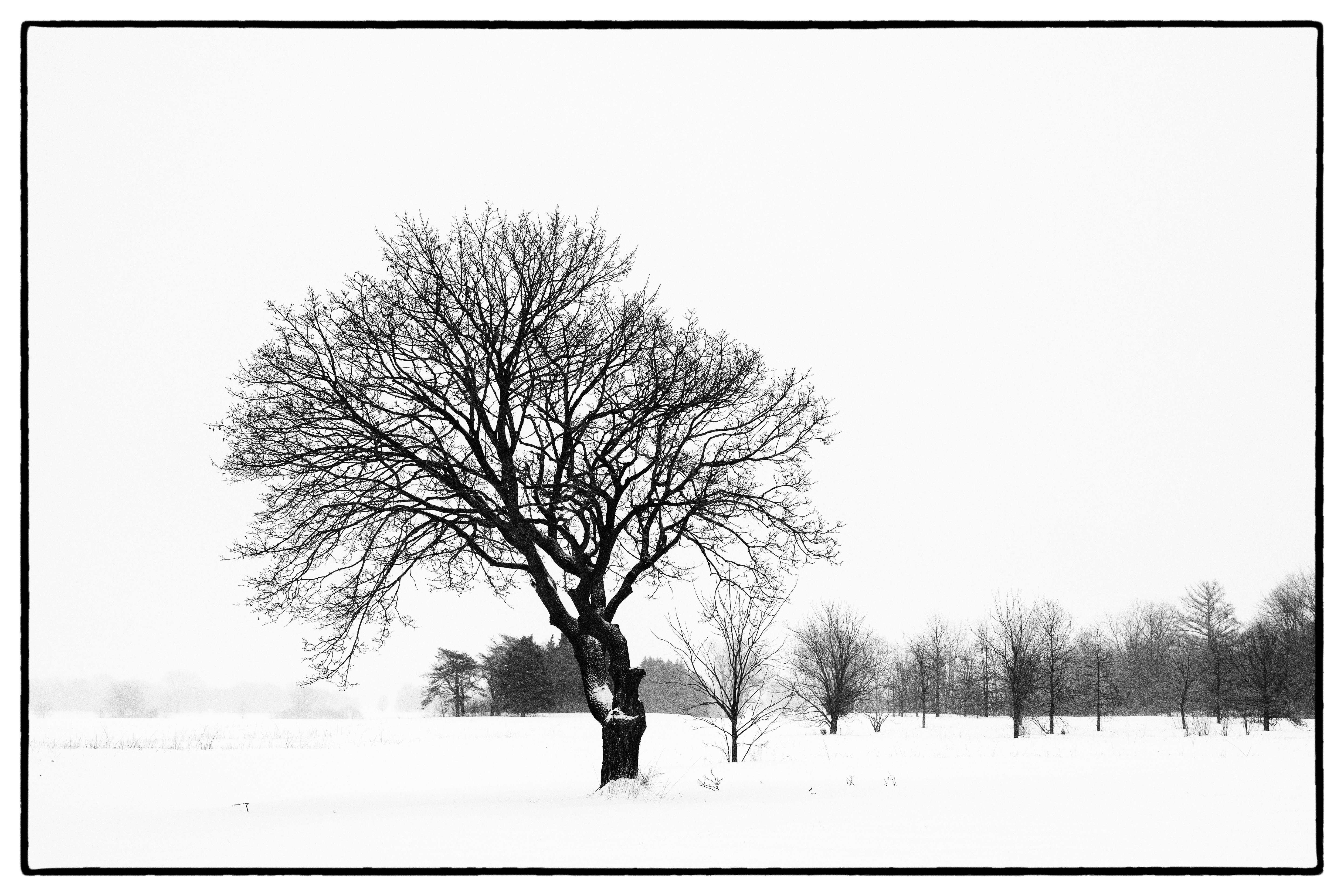 Regular viewers of the Fermilab Photo of the Day may recognize this tree, which, as the photographer's favorite, has graced our screens before. Last summer, a good-sized limb was lopped off, altering the shape that drew him to it in the first place and diminishing some of its appeal. During the polar vortex, the photographer made amends and captured it in all its frozen beauty. nature, winter, snow, landscape, plant, tree Photo: Tom Nicol