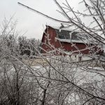 (1/4) The barn at Site 17 hides behind snow-covered branches. landscape, nature, winter, snow, building, barn, tree, plant Photo: Greg Deuerling