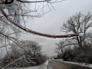 (2/4) Glassy ice completely sheaths a branch. nature, winter, ice, landscape, plant, tree Photo: Greg Deuerling