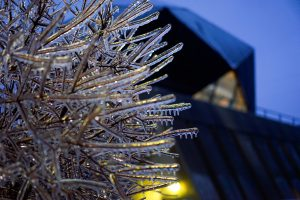 (3/4) The SiDet building provides a lovely background for an early-morning icy bush. nature, building, SiDet, ice, winter, plant, tree Photo: Leticia Shaddix
