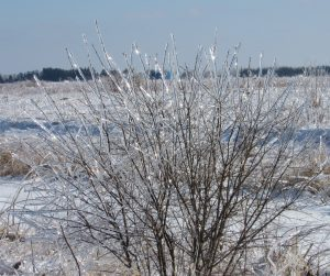 (5/5) The trees on Main Ring Road are all lit up. nature, landscape, winter, ice, tree, snow Photo: Luciano Elementi