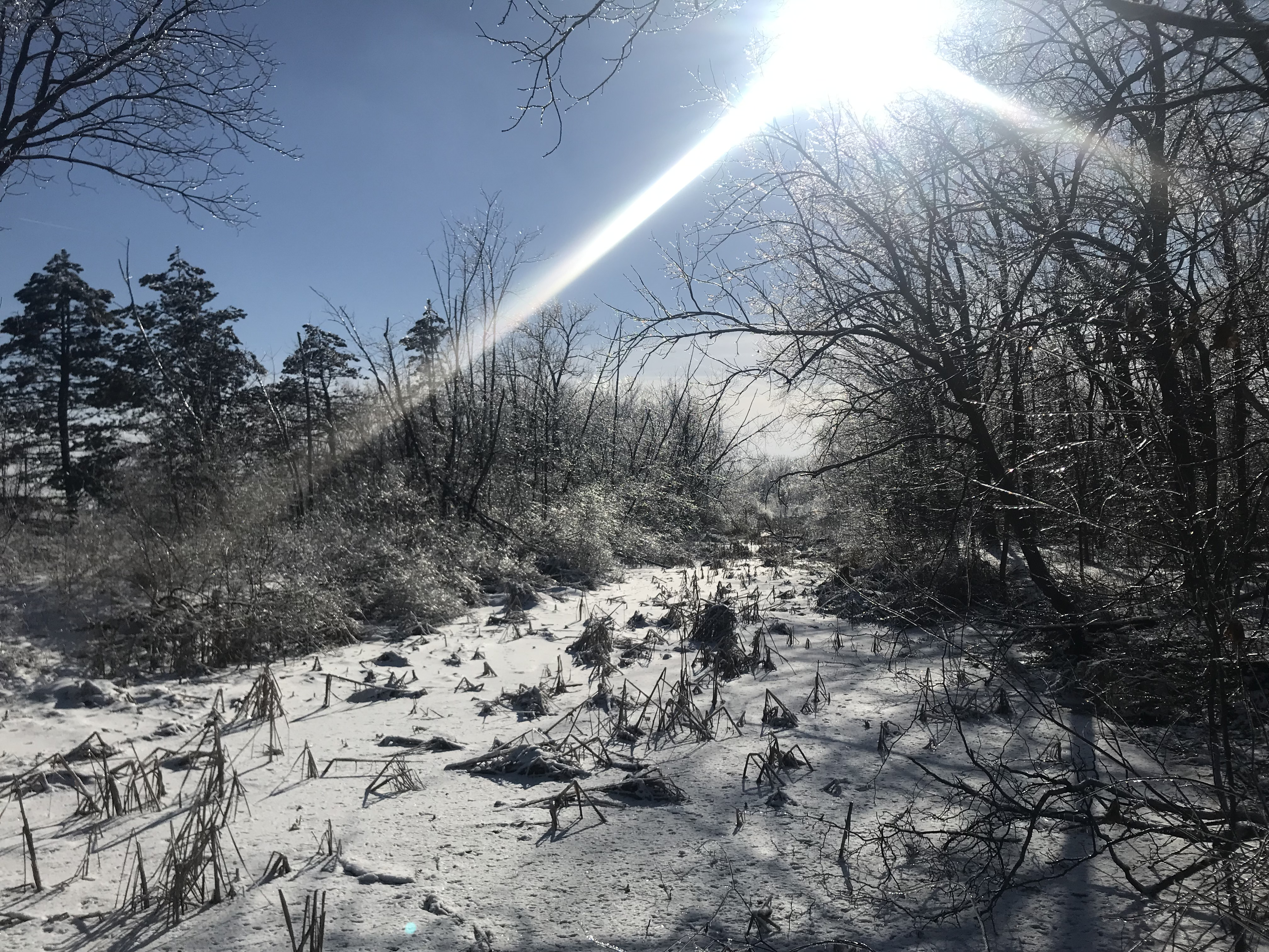 (3/3) The sun is shining, the snow has sheen. nature, landscape, winter, snow, sky, sun tree Photo: Carrie McGivern