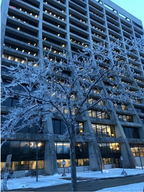 (3/5) A sparkling little crystal tree seems to be a favorite near Wilson Hall. winter, ice, tree, building, Wilson Hall Photo: Donatella Torretta