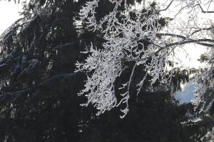 (4/5) The trees on site look like a wonderful forest of crystal sculptures. nature, tree, winter, ice Photo: Adrien Hourlier