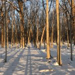 (1/2) Fermilab woods are wonderful to behold in the crepuscular light. This photo was taken on Feb. 18. nature, landscape, winter, snow, tree, woods, plant Photo: Anne Heavey