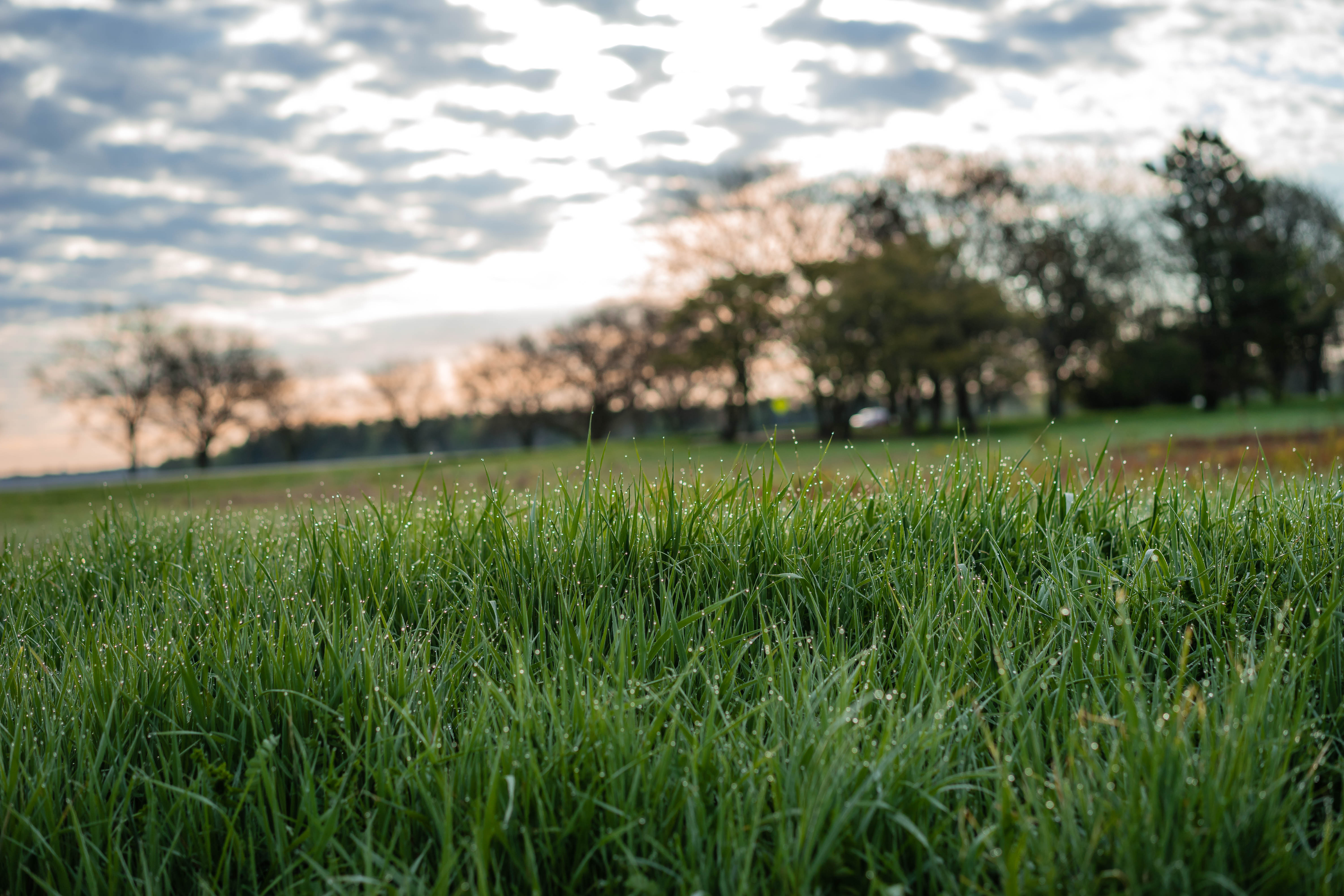 Can't wait to see dew on green grass again! nature, landscape, sky, plant, tree, grass, cloud Photo: Leticia Shaddix