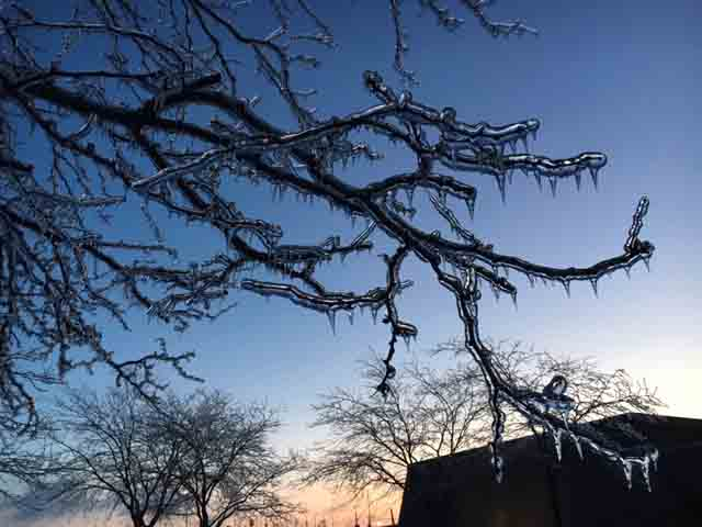 (1/5) The tree in the west parking lot of Wilson Hall is sheathed in ice. winter, ice, water, tree, plant, sky Photo: Lisa Carrigan