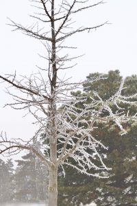 (4/4) ... and, on the other hand, it can be dangerous. nature, winter, ice, tree, plant Photo: Leticia Shaddix