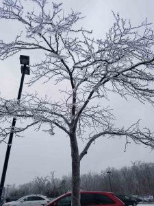 (5/5) The best tree in the west lot is seen from an up-close perspective. winter, tree, ice, sky Photo: Maria Powell