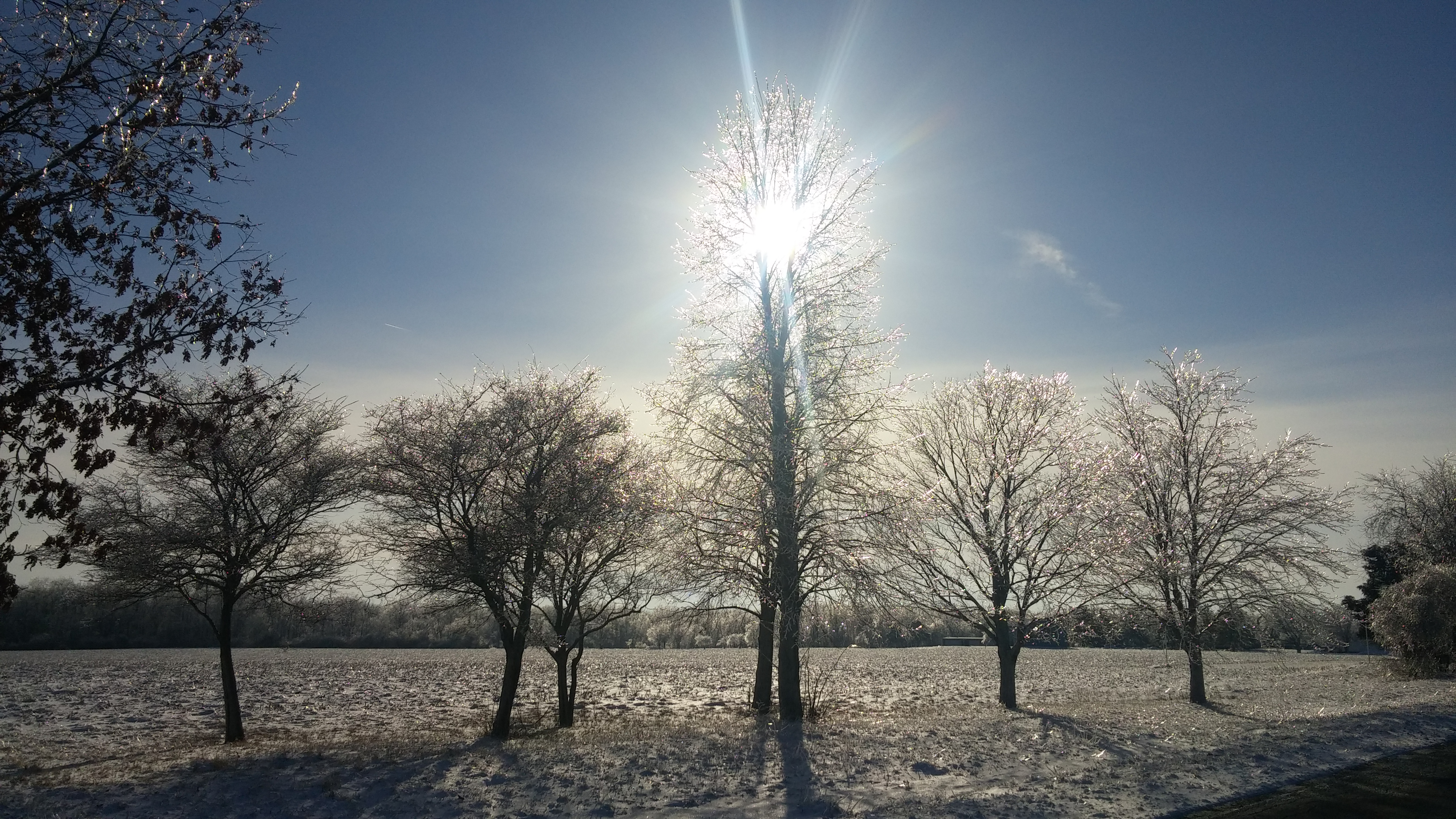 (1/2) This golden moment was taken near Pioneer Cemetery during the afternoon of Feb. 13. nature, landscape, winter, tree, sky, sun, snow, plant Photo: Greg Sellberg