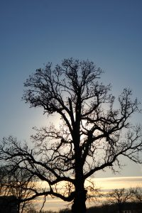 (3/3) Throwback Thursday: Even smaller branches stand out against the muted glow of the evening light. nature, landscape, tree, plant, sun, sky Photo: Marguerite Tonjes