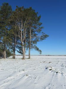(3/3) There's some blue sky around here somewhere. nature, landscape, tree, sky, snow Photo: Luciano Elementi