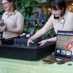 Willowbrook Wildlife Center staff show off a great plains rat snake and a Blanding's turtle. Photo: Leticia Shaddix