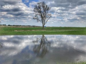 A solitary tree is seen through earth, water and the sky. nature, landscape, sky, cloud, plant, tree, water, pond, grass Photo: Sudeshna Ganguly