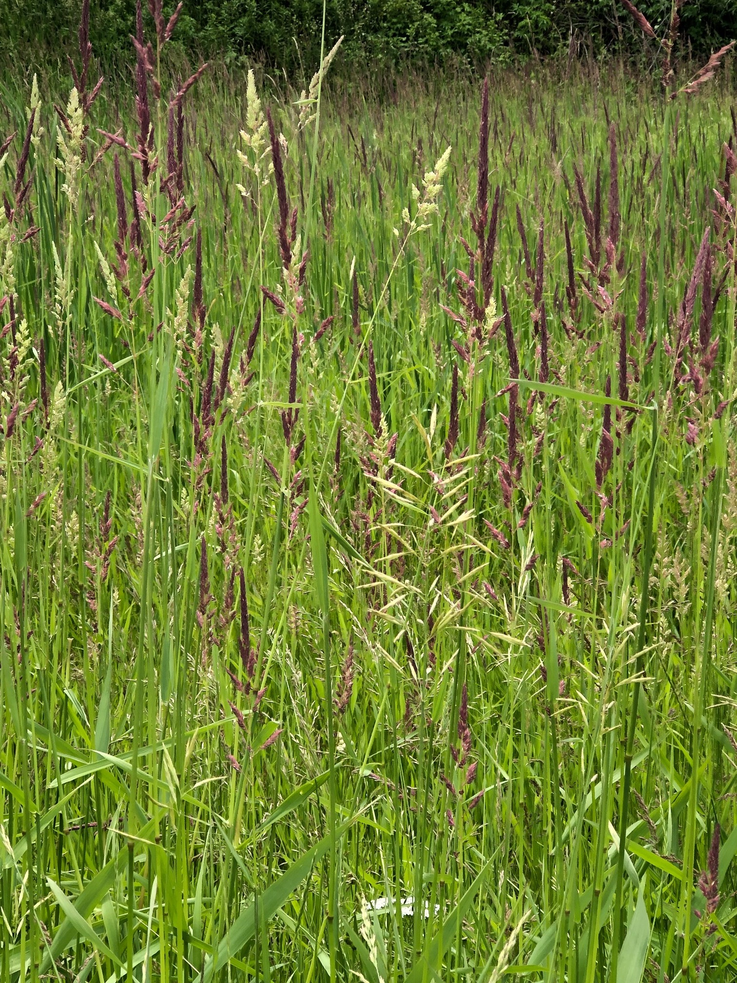 (3/3) The grasses of Fermilab are many. nature, plant, grass, prairie Photo: Janet Bishop
