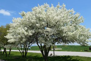 (1/2) Spring blossoms along AP30 are in their glory. nature, landscape, plant, tree, flower, spring, summer, sky Photo: Daniel Munger