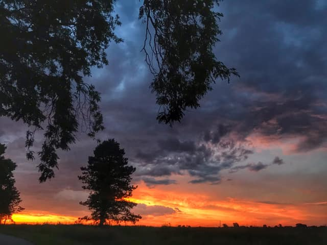 (3/4) And the trees add texture to the landscape. nature, landscape, tree, sky, cloud, sky, sunset Photo: Sudeshna Ganguly