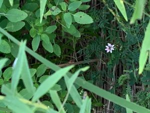 (1/4) A hidden beauty is uncovered on Aug. 23. nature, plant, flower, grass Photo: Spring Barrett