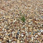 A grass shoot takes hold, adding some visual interest to this colorful sea of stones, outside the new APS-TD facility. nature, plant, grass, rock Photo: Mike Tartaglia