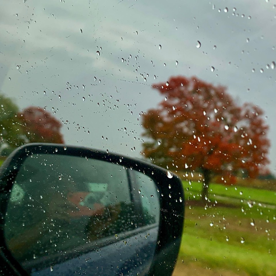 It's the first colors of fall, captured on Oct. 14. nature, landscape, fall, autumn, rain, sky, tree, plant Photo: Sudeshna Ganguly