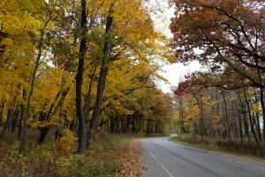 (2/2) The colors of fall on outbound Pine Street. nature, landscape, fall, autumn, plant, tree Photo: Daniel Munger