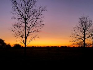This beautiful dawn sky was captured near Warehouse 2. nature, landscape, winter, sky, sunrise, dawn, plant, tree Photo: Maredith Stoffel