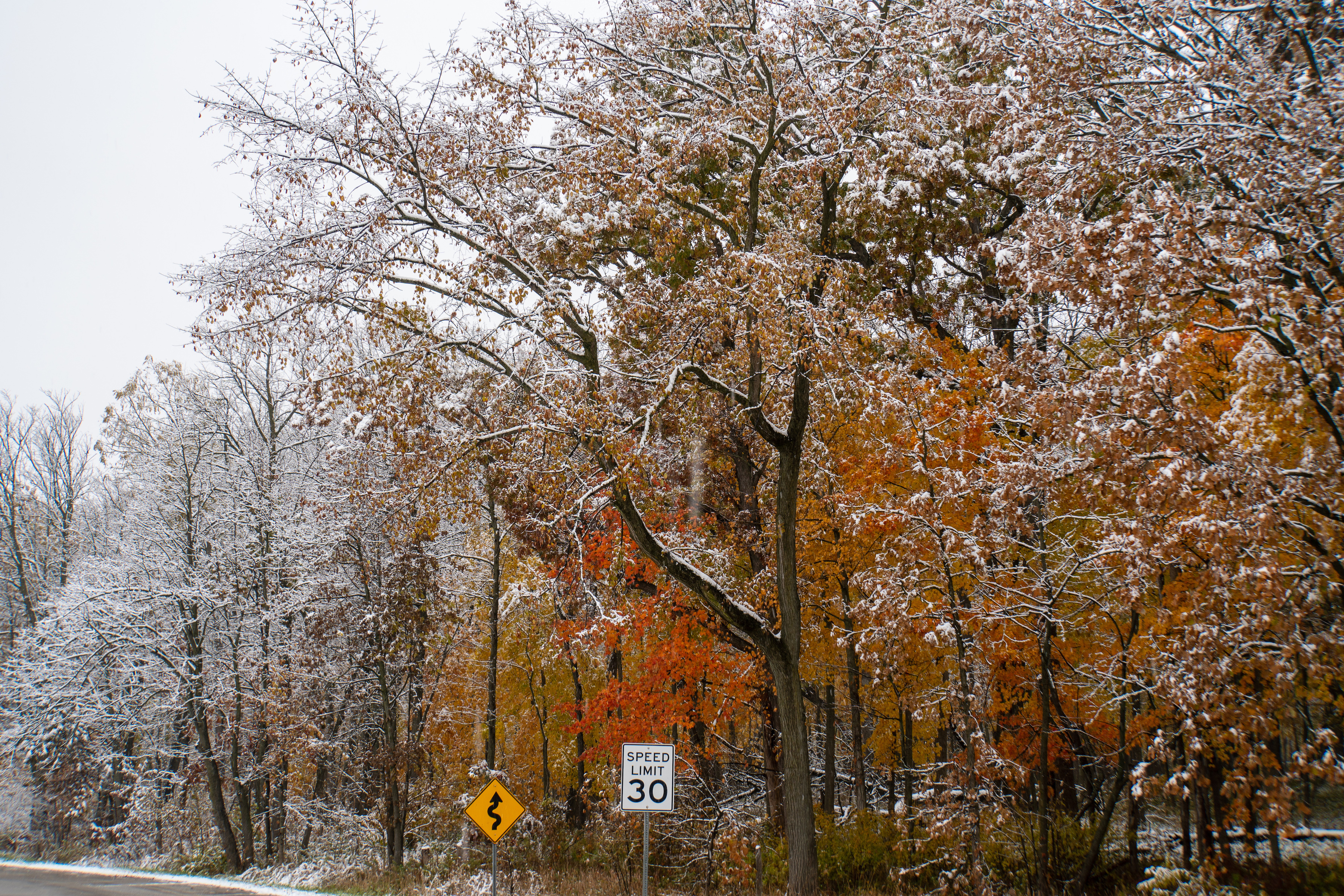 (2/4) The snow on Oct. 30 show the difference a day makes in the fall scenery. nature, landscape, fall, autumn, winter, snow, woods, tree, plant Photo: Marguerite Tonjes