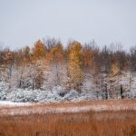 nature, landscape, autumn, fall, winter, snow, woods, plant, tree Photo: Marguerite Tonjes