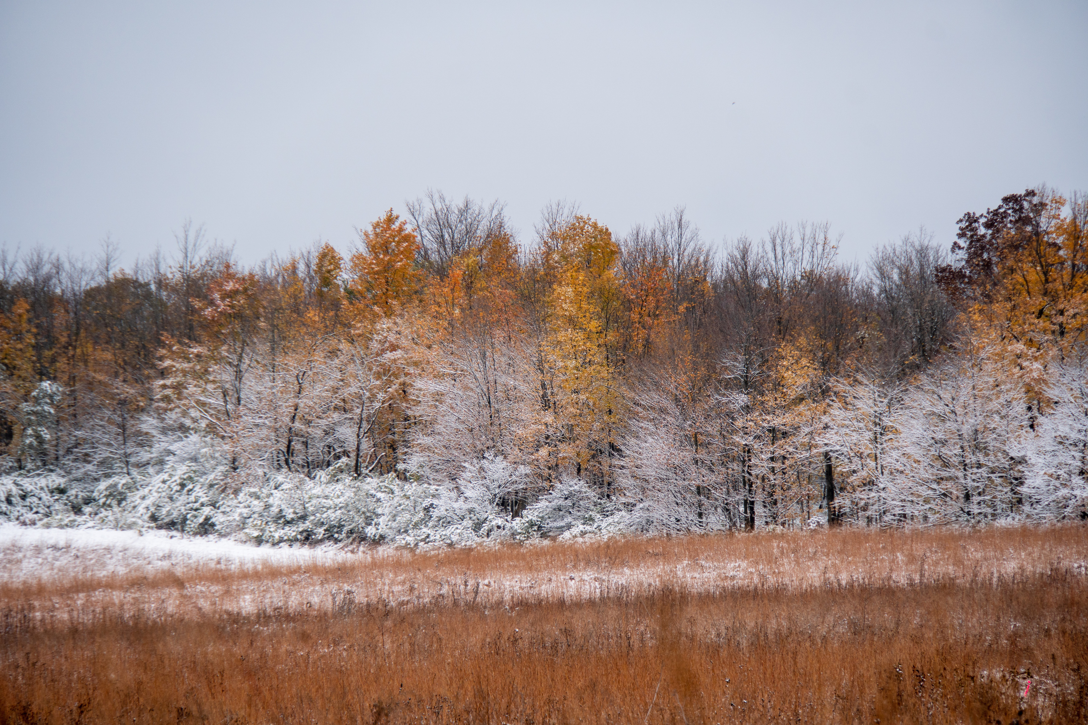 From a distance, the slow arrival of winter is evident. What a difference a day makes. nature, landscape, autumn, fall, winter, snow, woods, plant, tree Photo: Marguerite Tonjes