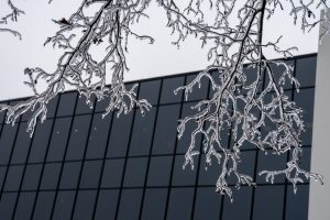 (2/2) Ice covered every twig, as seen on this tree in front of Feynman Computing Center. nature, building, Feynman Computing Center, winter, ice, storm, tree, plant Photo: Marguerite Tonjes