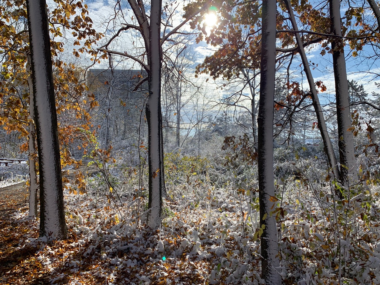 Autumn and winter blend in this Nov. 1 scene of the woods between Wilson Hall, visible in the background, and the Lederman Science Center. nature, landscape, building, Wilson Hall, autumn, fall, winter, woods, plant, tree Photo: Michael Baird