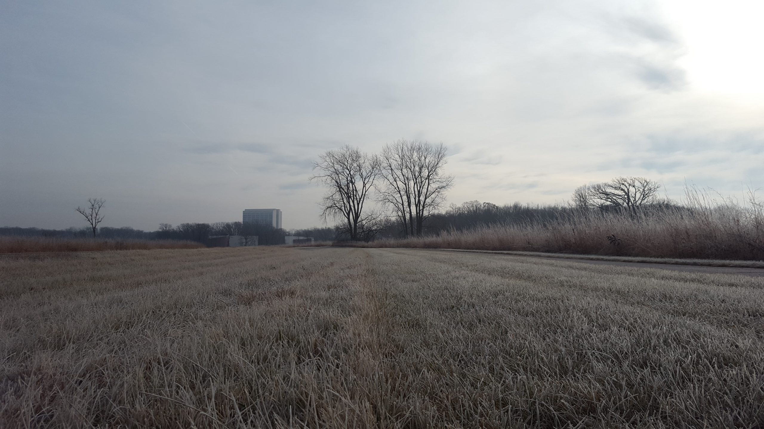 (1/2) It was a sunny but frosty morning at Fermilab on Dec. 20, 2019. nature, landscape, winter, sky Photo: Marco Mambelli
