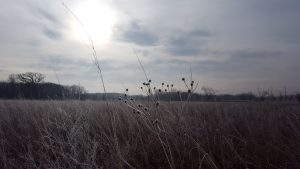 (2/2) The prairie is breathtaking at all times of the year. nature, landscape, prairie, winter, sky, sun Photo: Marco Mambelli