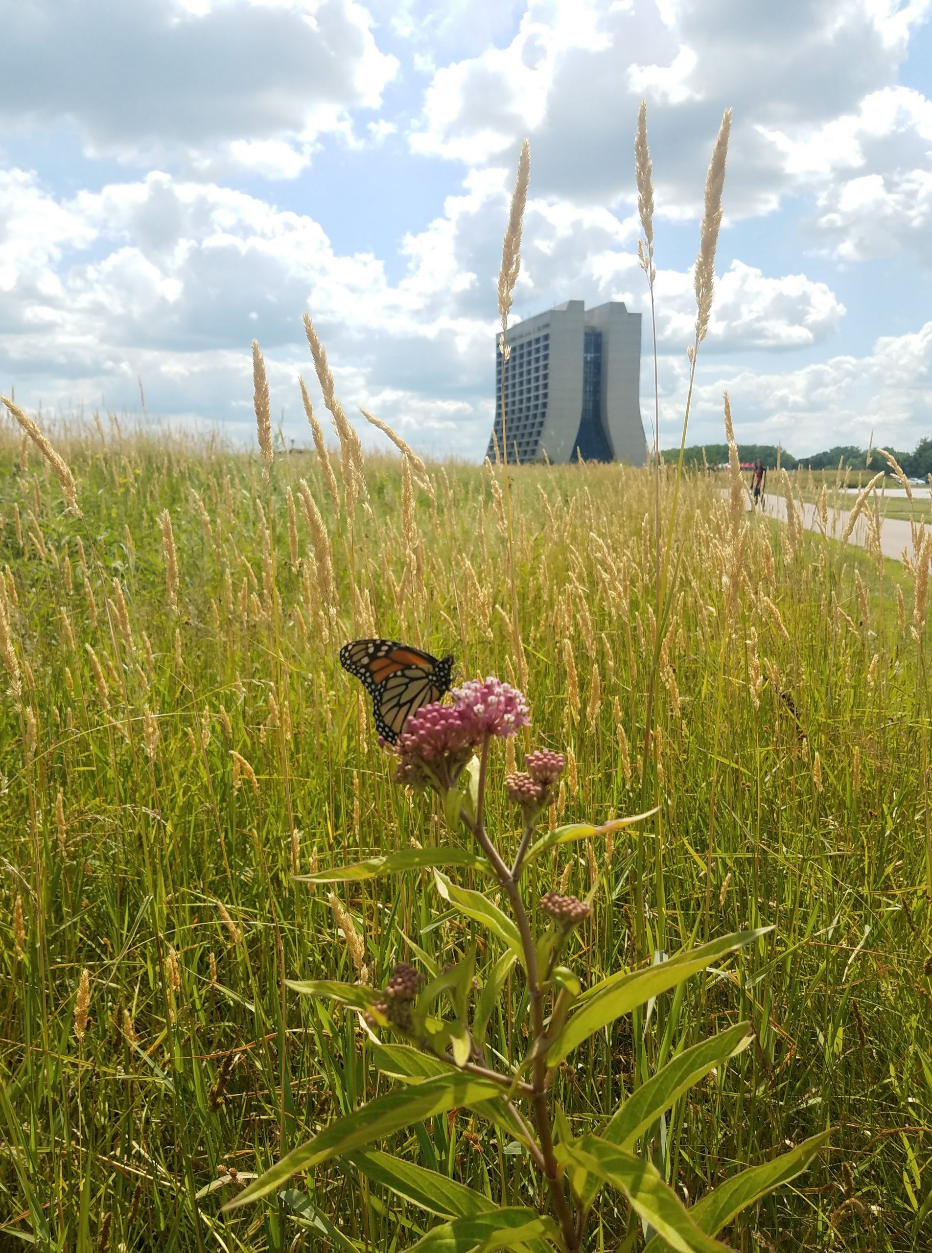 In spring 2019, a butterfly alights on a flower, with Wilson Hall in the background. nature, wildlife, animal, insect, butterfly, prairie, building, Wilson Hall, landscape, spring Photo: Marilyn Wodzinski