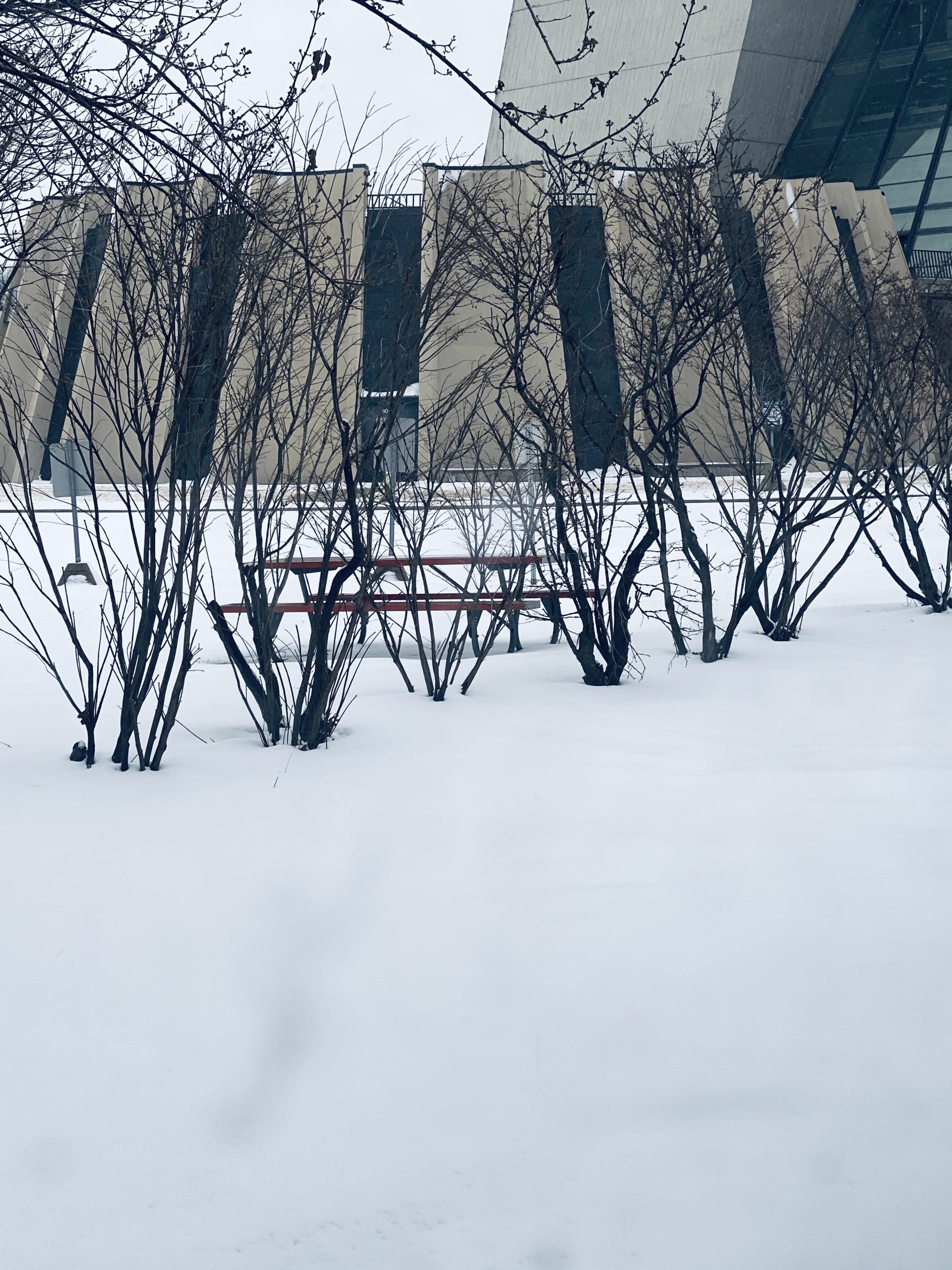 Finally: a beautiful view of Fermilab with not a car in sight, not even in the ever popular parking area by the cross gallery. building, winter, snow Photo: Sushmabhargavi Nimmalapalli