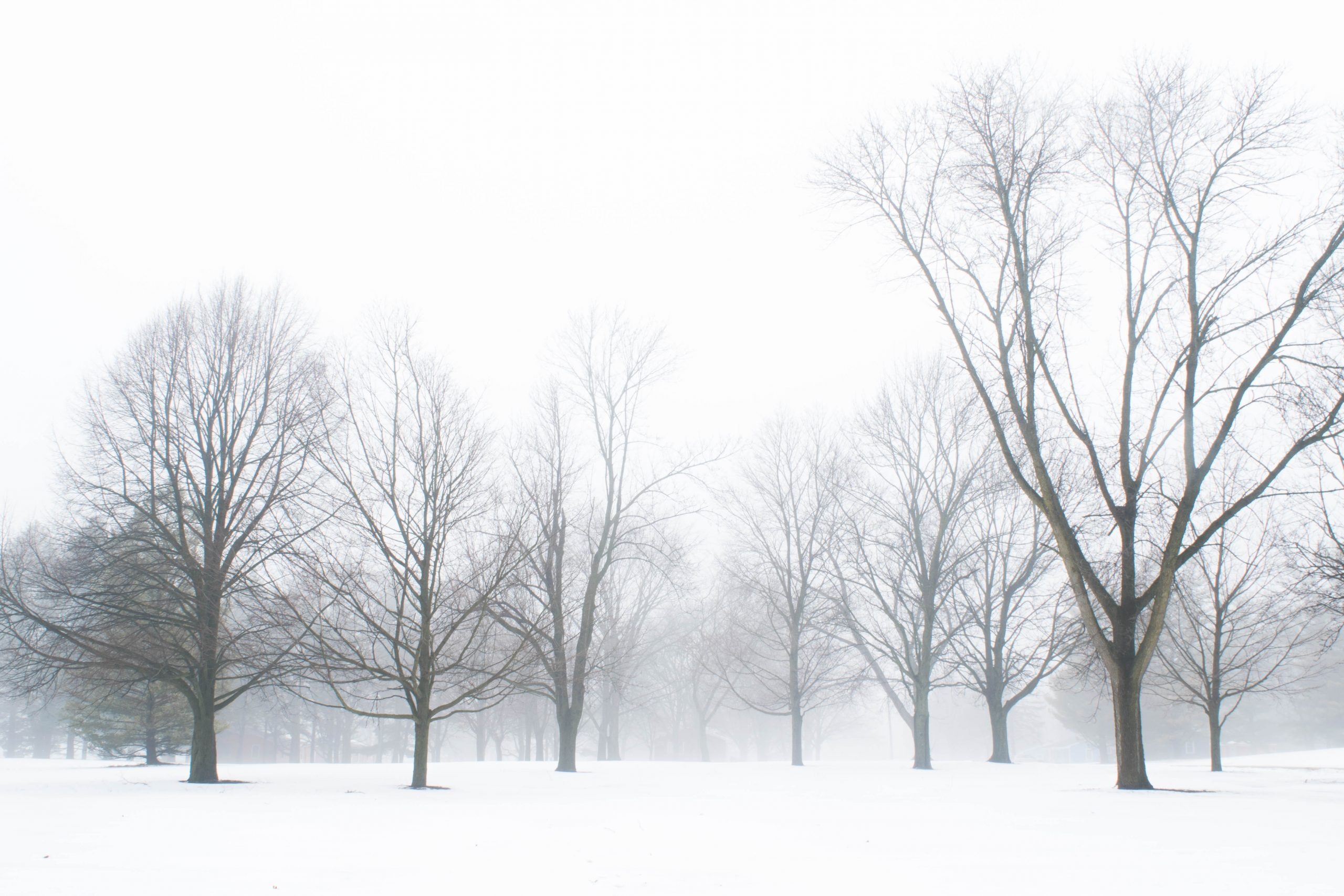 Trees become the signal against January's white background in the Fermilab Village. nature, landscape, winter, snow, sky, tree, plant Photo: Maria Emilia Ruiz