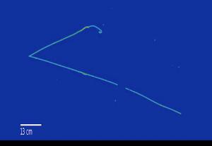 Heavy neutrino decay simulation